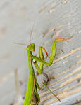 Praying Mantis look by Anantaphoto