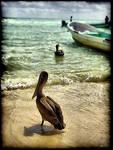 la Playa de los Pelicanos by dogmadic