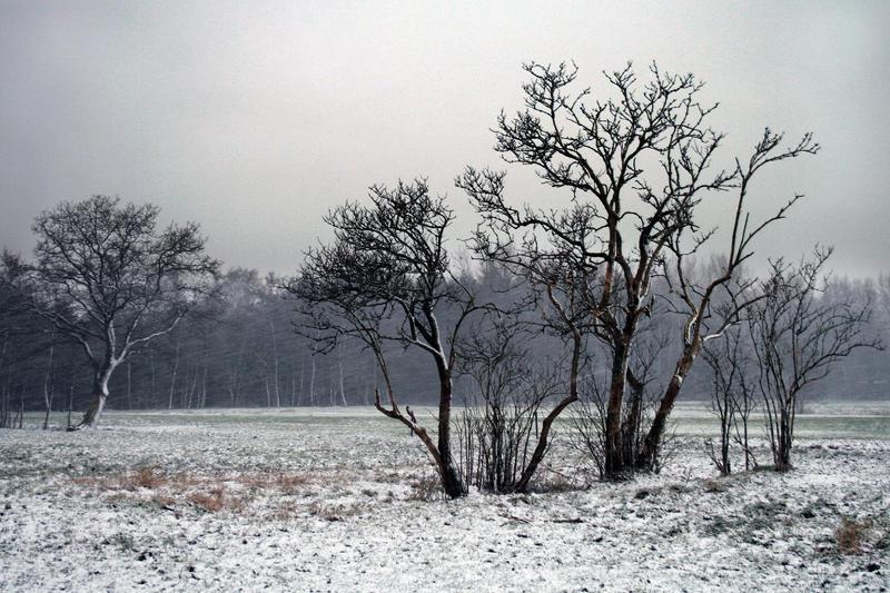 Winter 1 by vivstock