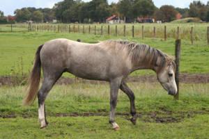 Pony01 by vivstock
