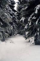 Snow by vivstock