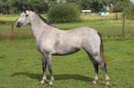 Pony03