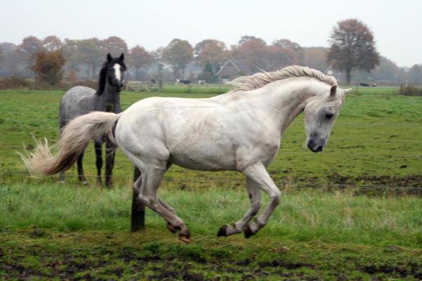 Pony04 by vivstock