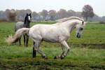 Pony04