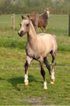 Foal01
