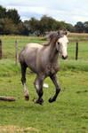 pony06