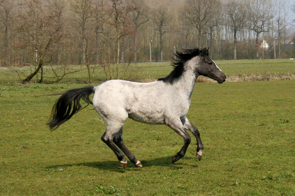 pony07 by vivstock