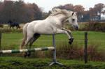 Pony08