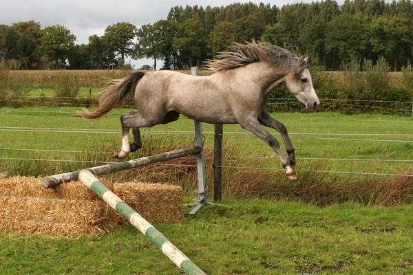 Pony09 by vivstock