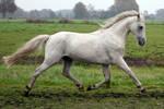 pony15