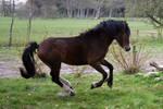 Pony17