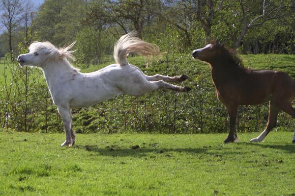 Ponies01 by vivstock
