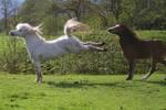 Ponies01