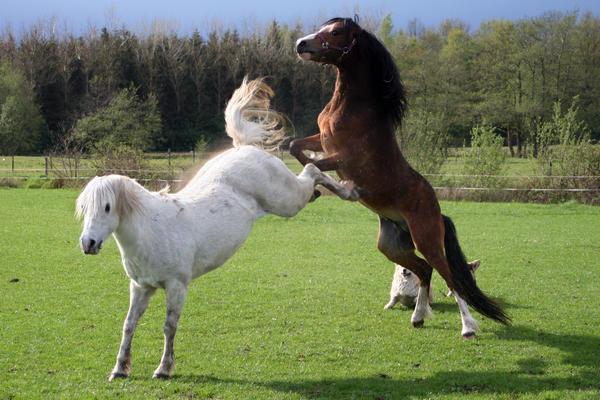 Ponies02 by vivstock