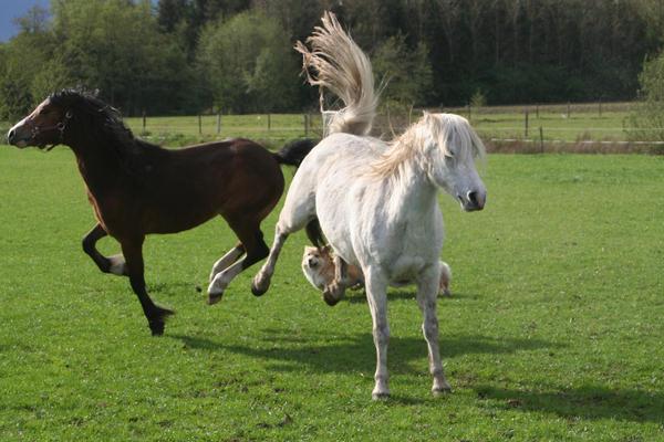 Ponies03 by vivstock