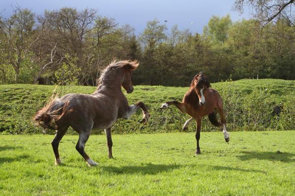 Ponies04 by vivstock