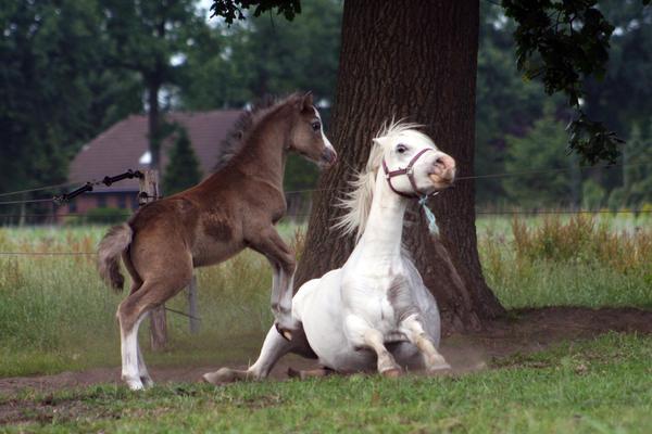 Foal07 by vivstock