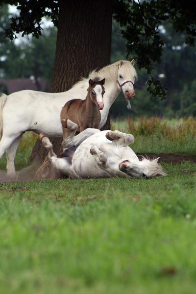 Pony19 by vivstock