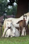 Pony22