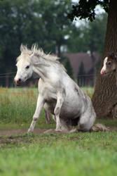 Pony23