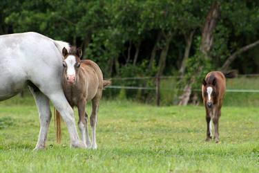 Foal08