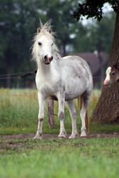 Pony24