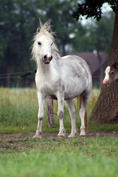 Pony24 by vivstock