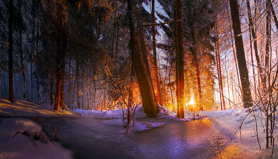 Winter's Bloom by mpdman