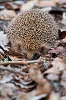 Vertical Igel by mpdman
