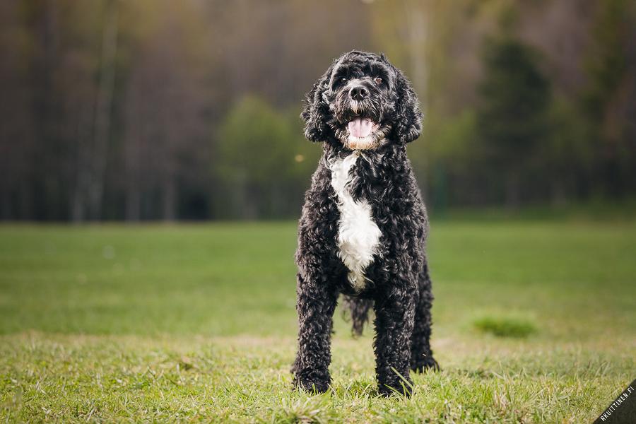 Doggy by mpdman