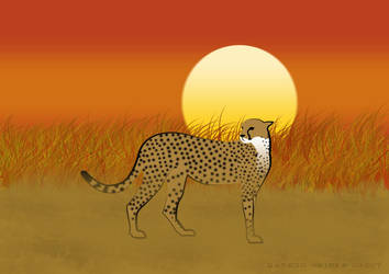 Cheeta by erlkoenig