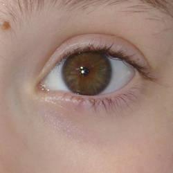 Brown-Hazel eye stock free by LittleKricketPony5