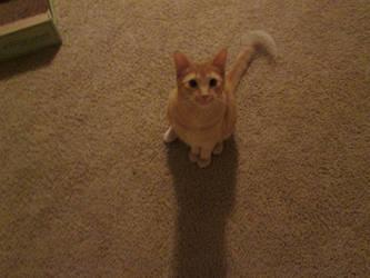 Cat Stock Free by LittleKricketPony5