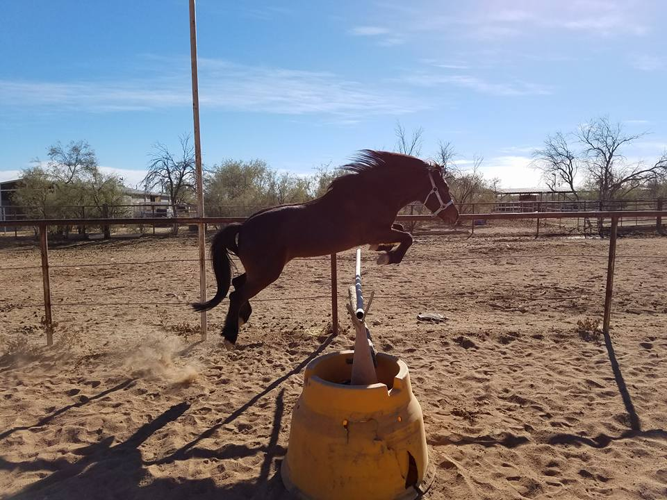 Horse Jump Stock Free by LittleKricketPony5