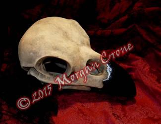 Large Crow Skull Sculpture 2