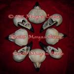 Crow Skull Formantion