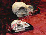 Larger than Life Crow Skulls