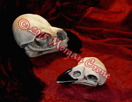 Giant Crow Skull Sculptures Side-by-Side Size