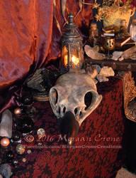 Giant Corvid Skull