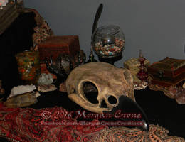 Giant Corvid Skull 3 by MorganCrone