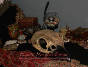 Giant Corvid Skull 3