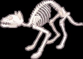 F2U Cat Skeleton