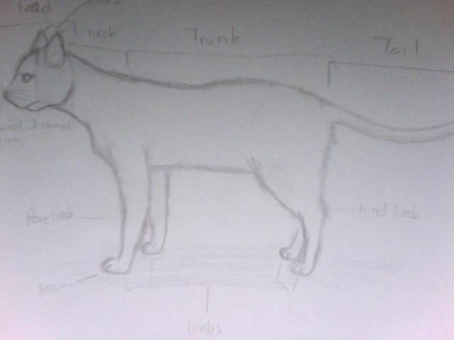 Cat External Anatomy By Thelittledrummerboy On Deviantart