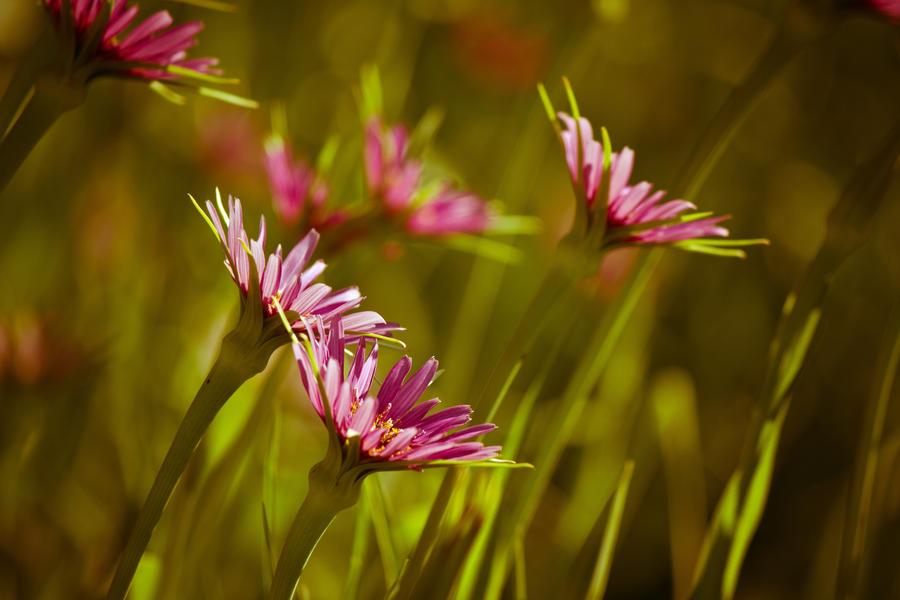 IMAGE: http://fc06.deviantart.net/fs70/i/2011/127/8/7/garden_at_mount_vernon_2_by_bovey_photo-d3fu88q.jpg