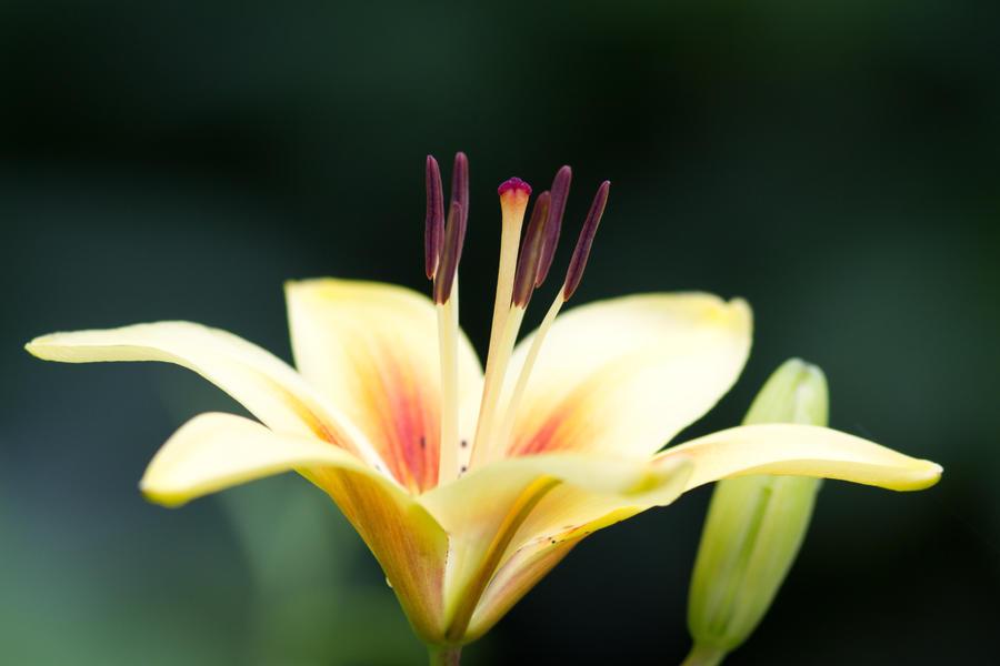 IMAGE: http://fc02.deviantart.net/fs70/i/2011/151/3/2/burst_of_yellow_by_bovey_photo-d3hojhn.jpg