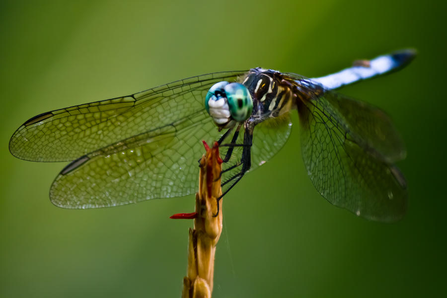 IMAGE: http://fc06.deviantart.net/fs71/i/2011/185/6/8/dragonfly_at_occoquan_2_by_bovey_photo-d3kysgj.jpg