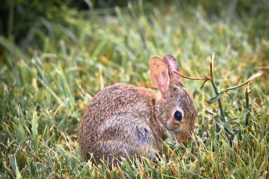 IMAGE: http://fc01.deviantart.net/fs71/i/2011/185/d/2/rabbit_by_bovey_photo-d3kywwj.jpg