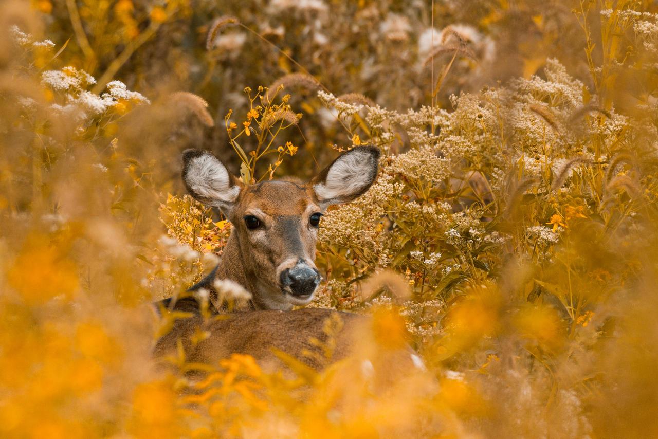 IMAGE: http://fc04.deviantart.net/fs70/i/2013/285/b/c/deer_bouquet_by_bovey_photo-d6q8yu1.jpg