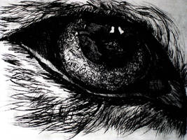 Incisione 06 - Occhio di Lupo 2010 - 2011 by Johnny-Drago