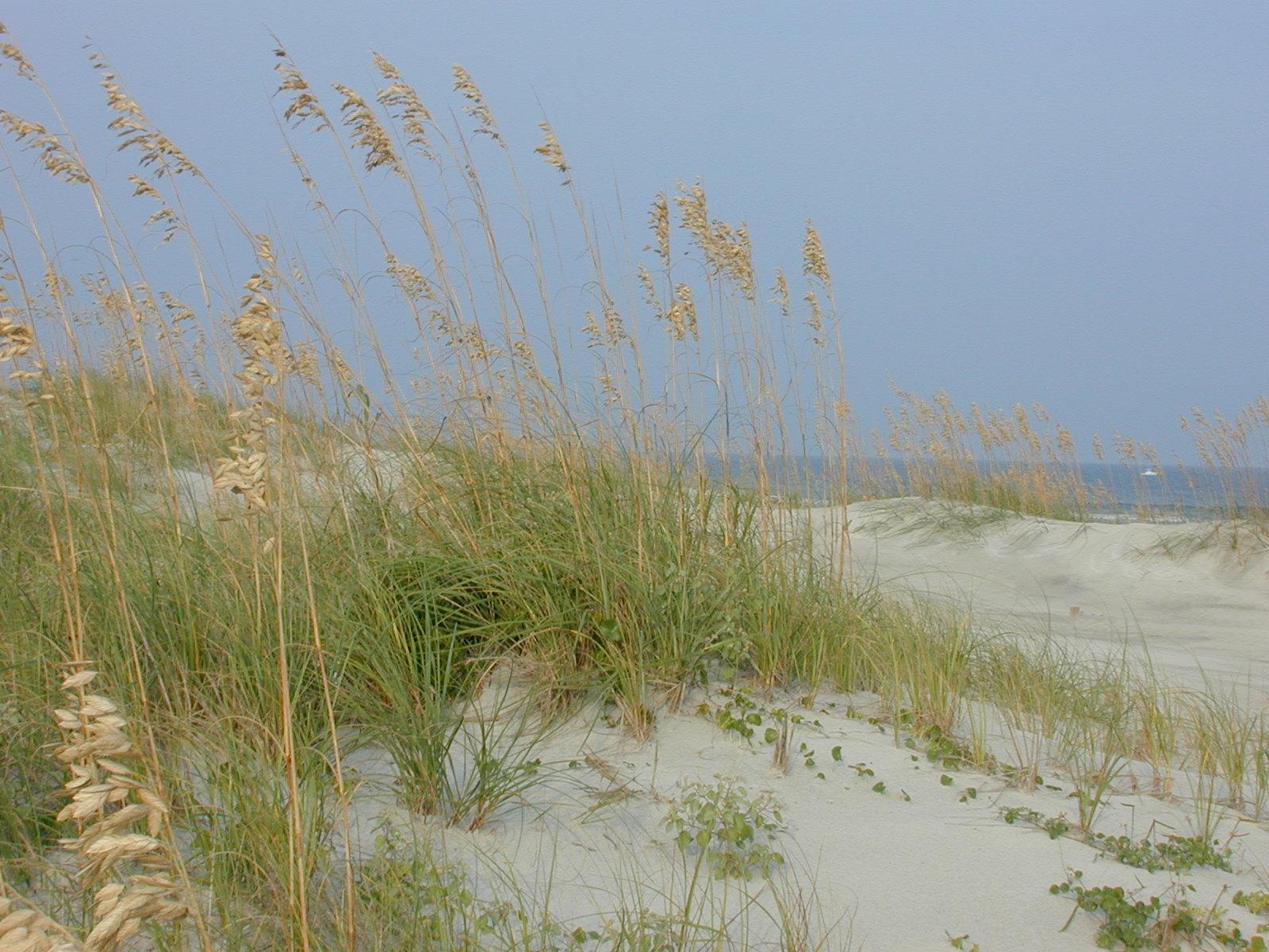 Ocean Dunes by JennyM-Pics